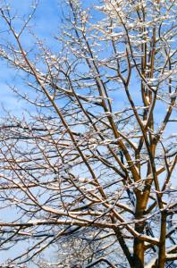 winter-tree-and-blue-sky