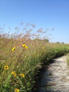 Nebraska Prairie Grass 1