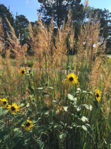 Nebraska Prairie Grass