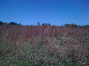 Nebraska Prairie Grass 3